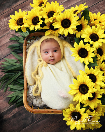 Marisela Rivera | Newborn Girl Portfolio Sunflower